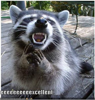 funny-pictures-evil-raccoon.jpg